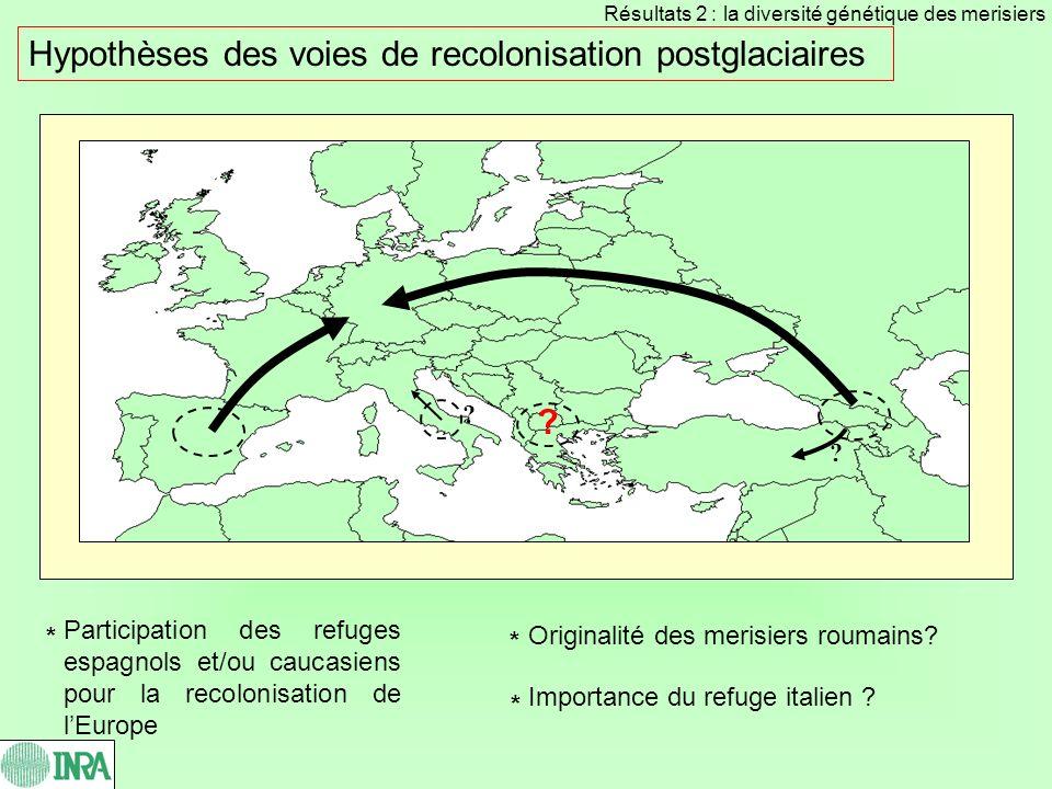 Hypothèses des voies de recolonisation postglaciaires Participation des refuges espagnols et/ou caucasiens pour la recolonisation de lEurope ? Origina