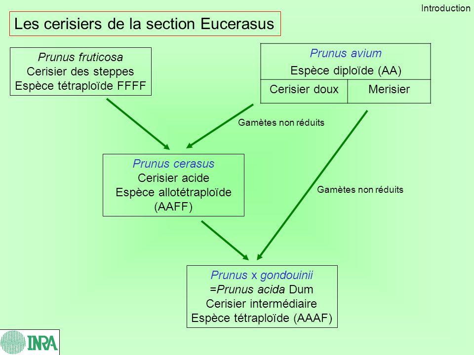 Prunus aviumPrunus cerasus Différenciation morphologique des cerisiers doux et acides P.