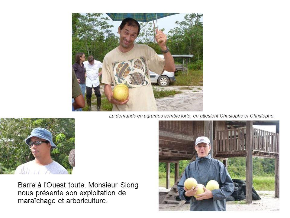 Barre à lOuest toute. Monsieur Siong nous présente son exploitation de maraîchage et arboriculture. La demande en agrumes semble forte, en attestent C