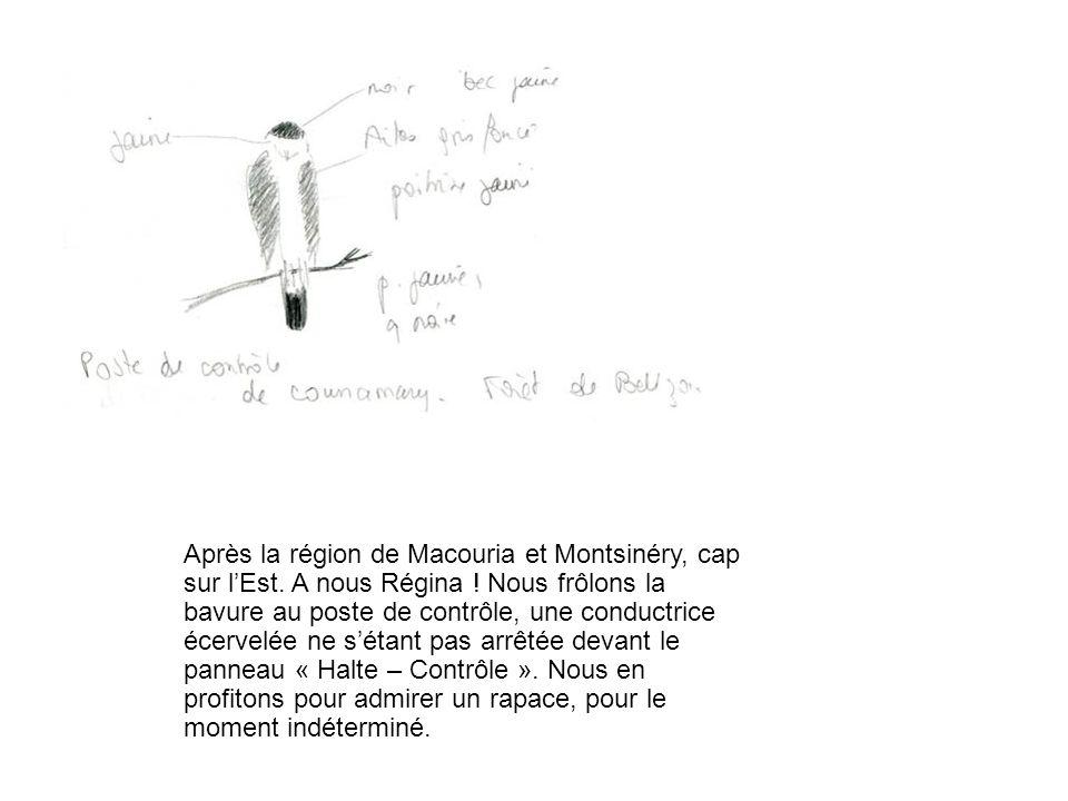 Après la région de Macouria et Montsinéry, cap sur lEst. A nous Régina ! Nous frôlons la bavure au poste de contrôle, une conductrice écervelée ne sét