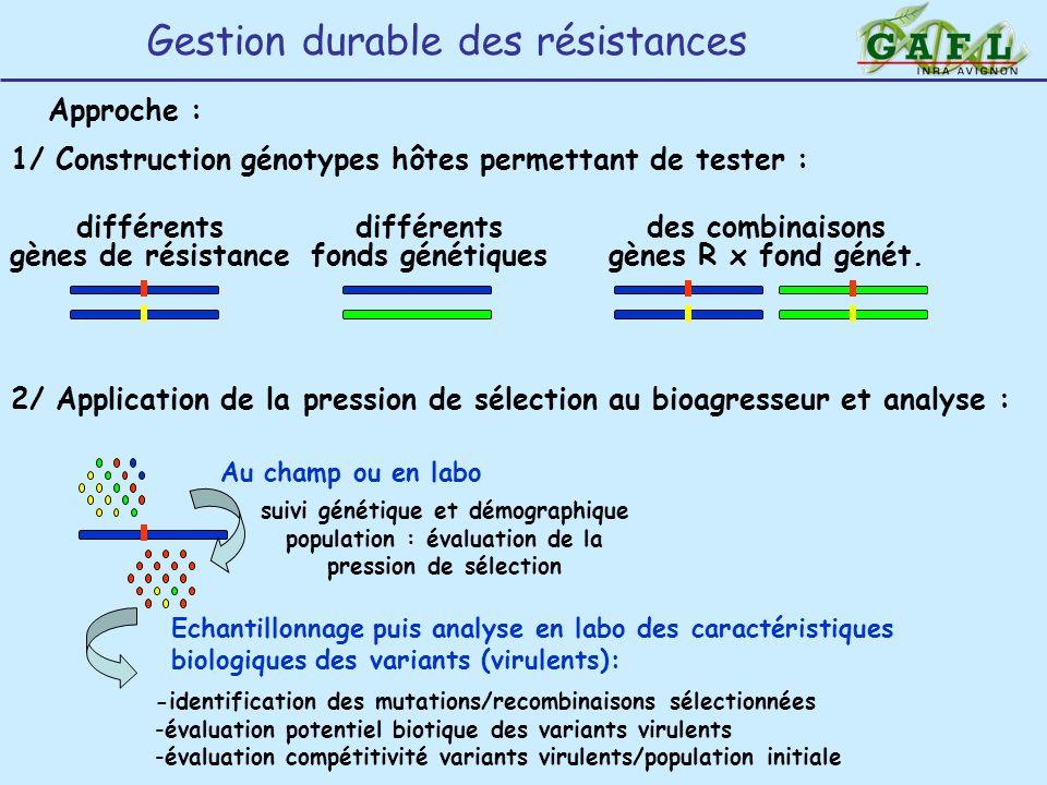 Gestion durable des résistances Approche : 1/ Construction génotypes hôtes permettant de tester : différents gènes de résistance différents fonds géné