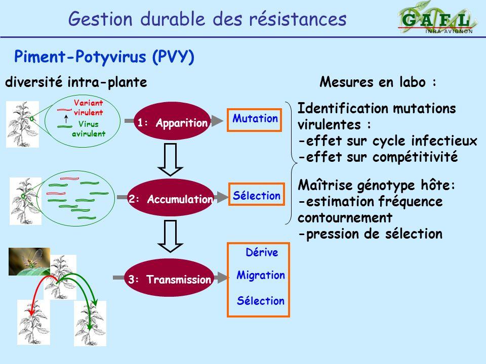 Gestion durable des résistances Piment-Potyvirus (PVY) Virus avirulent Variant virulent Mutation 1: Apparition Dérive 3: Transmission Migration Sélect
