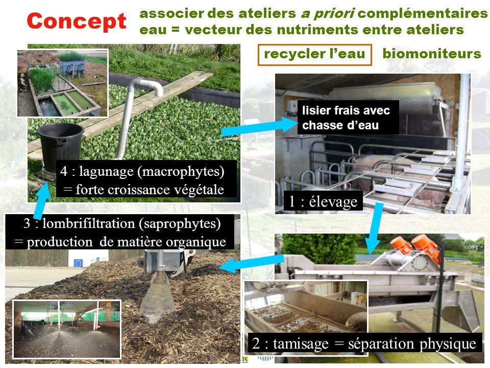 Dispositif expérimental macrophytes Sl points déchantillonnage SlSl 50 fois moins de surface quun épandage lagunes (L) et filtres plantés (FP) L1FP2L3FP4L5 lagune tampon à niveau variable 4-5 m 3 /j effluent brut Sp 30 truies chasse deau truies porcherie aliments boues décanteur D0 lombri- compost épandage + maturation (lombrifiltration) (lombricompostage) lombriciens effluent lombrifiltré SlSl tamis effluent tamisé St refus de tamisage faeces