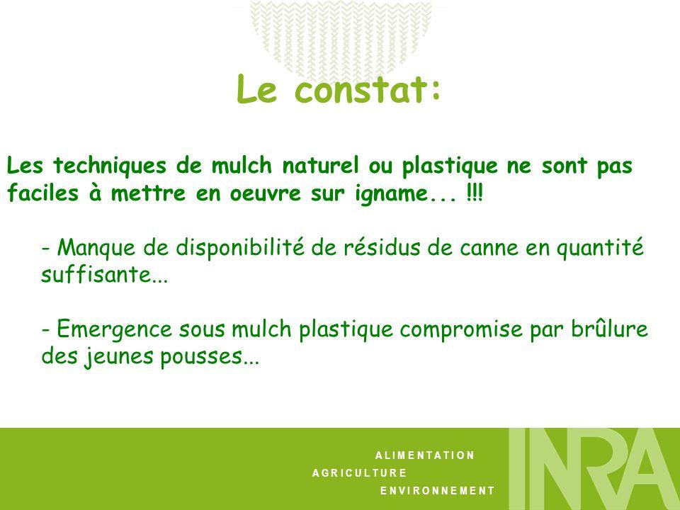 A L I M E N T A T I O N A G R I C U L T U R E E N V I R O N N E M E N T Lidée: Remplacer la canne ou le plastique par une matière biodégradable, pas trop onéreuse, et naltérant pas les propriétés du sol - Le papier Kraft