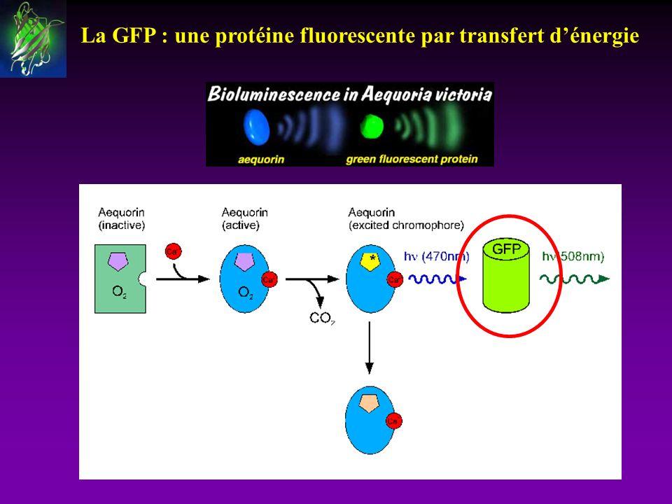 La GFP : une protéine fluorescente par transfert dénergie