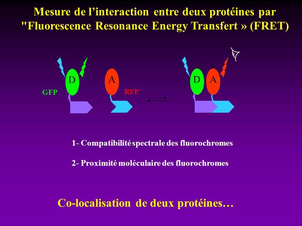 DA A D 1- Compatibilité spectrale des fluorochromes 2- Proximité moléculaire des fluorochromes Mesure de linteraction entre deux protéines par