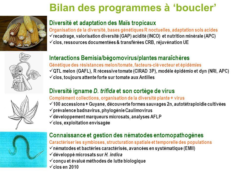Bilan des programmes à boucler Diversité et adaptation des Maïs tropicaux Organisation de la diversité, bases génétiques R noctuelles, adaptation sols