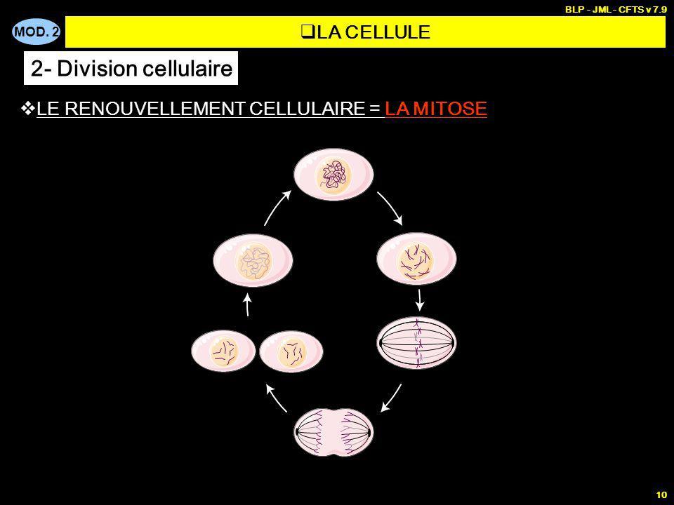MOD. 2 BLP - JML - CFTS v 7.9 10 LE RENOUVELLEMENT CELLULAIRE = LA MITOSE LA CELLULE 2- Division cellulaire