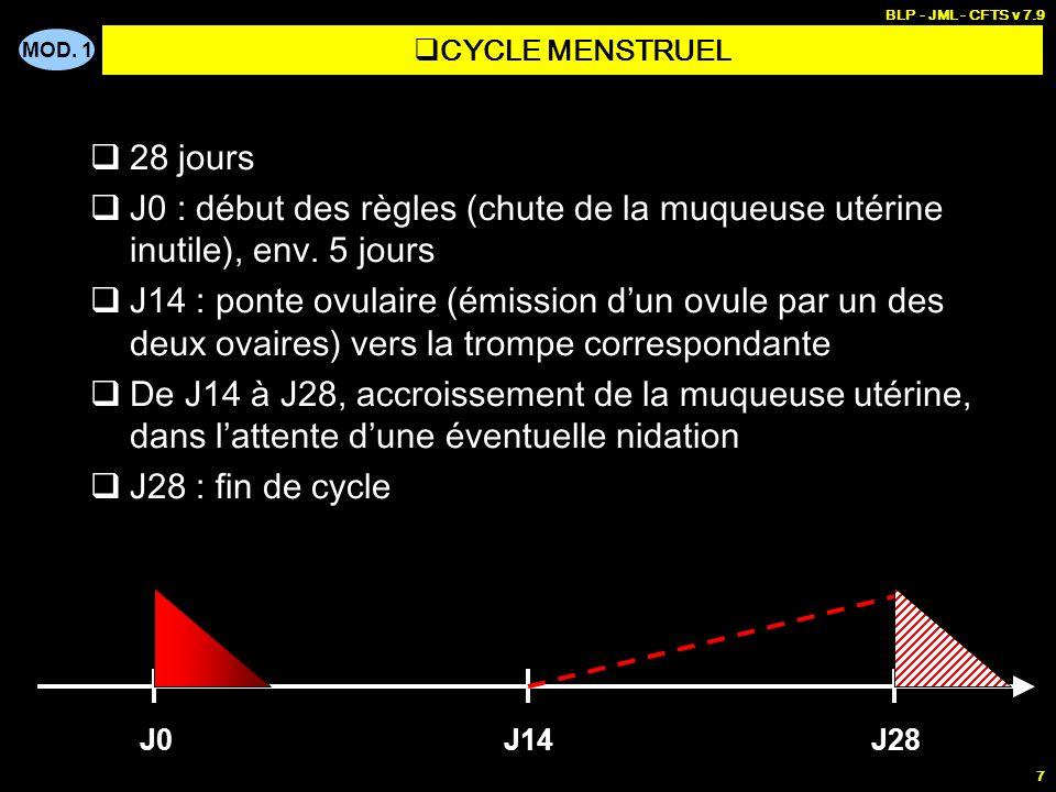 MOD. 1 BLP - JML - CFTS v 7.9 28 PERIODE FŒTALE 5 mois PERIODES GESTATIONNELLES