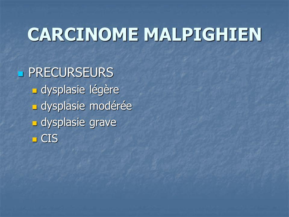 CARCINOME MALPIGHIEN PRECURSEURS PRECURSEURS dysplasie légère dysplasie légère dysplasie modérée dysplasie modérée dysplasie grave dysplasie grave CIS