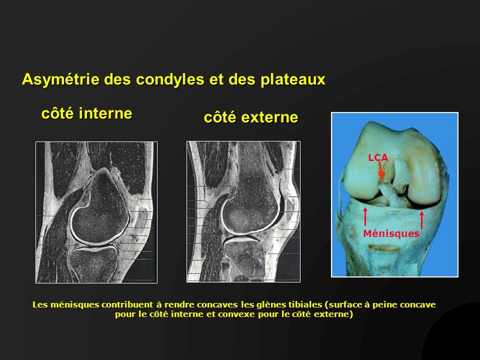 Radiologie -RX standard -goniométrie