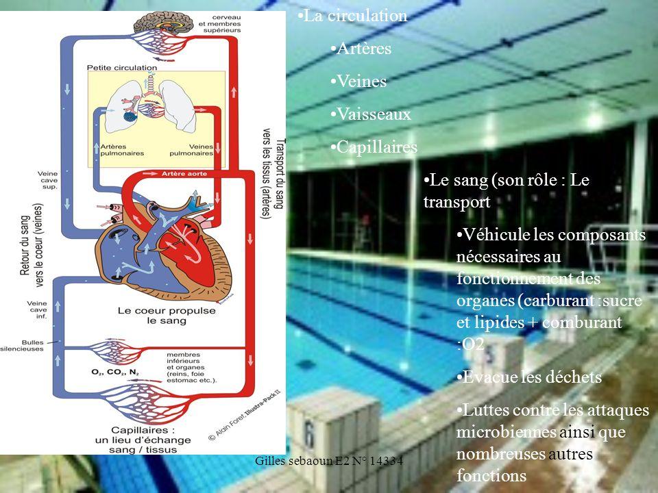 Gilles sebaoun E2 N° 14334 Le sang (son rôle : Le transport Véhicule les composants nécessaires au fonctionnement des organes (carburant :sucre et lip