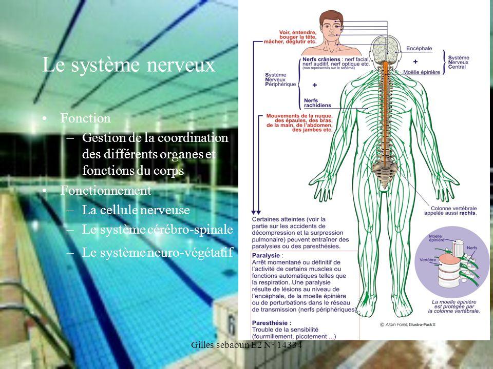 Gilles sebaoun E2 N° 14334 Le système nerveux Fonction –Gestion de la coordination des différents organes et fonctions du corps Fonctionnement –La cel
