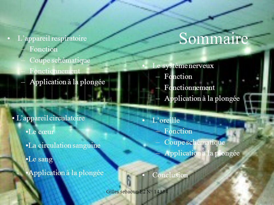 Gilles sebaoun E2 N° 14334 Sommaire Lappareil respiratoire –Fonction –Coupe schématique –Fonctionnement –Application à la plongée Le système nerveux –