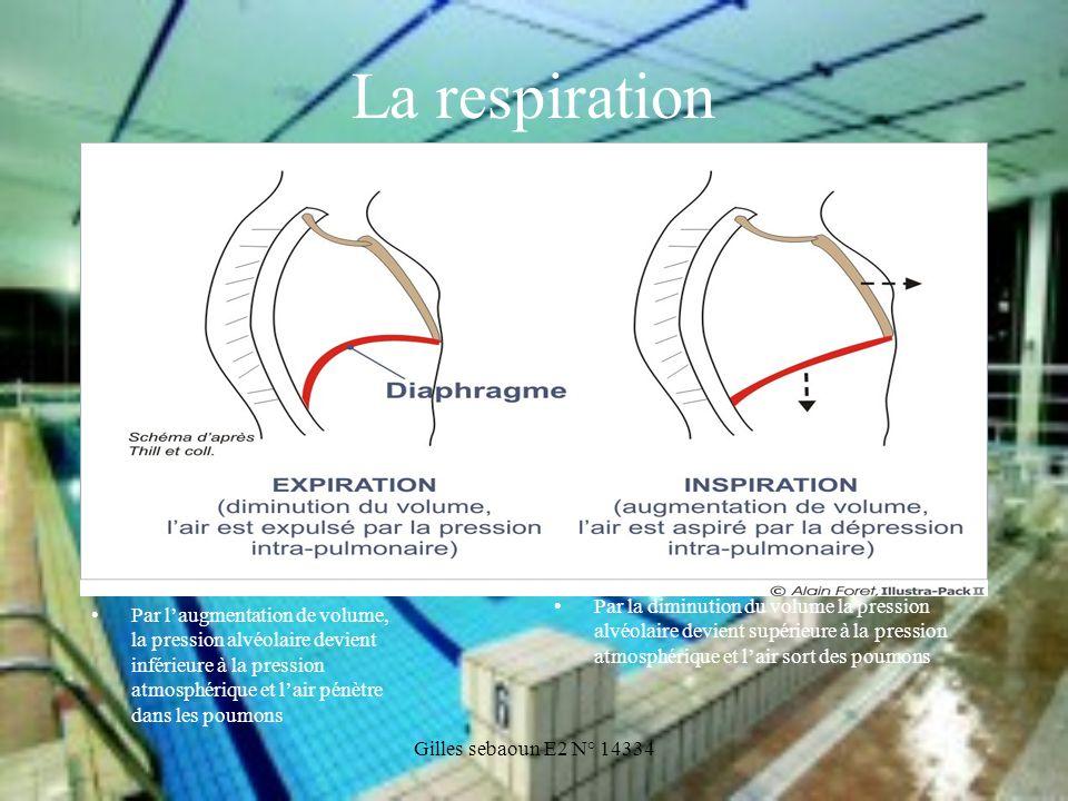 Gilles sebaoun E2 N° 14334 La respiration Par laugmentation de volume, la pression alvéolaire devient inférieure à la pression atmosphérique et lair p