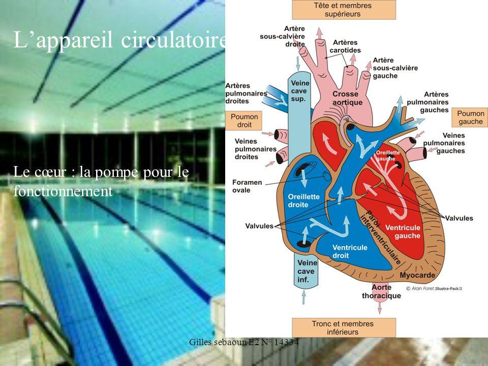 Gilles sebaoun E2 N° 14334 Lappareil circulatoire Le cœur : la pompe pour le fonctionnement