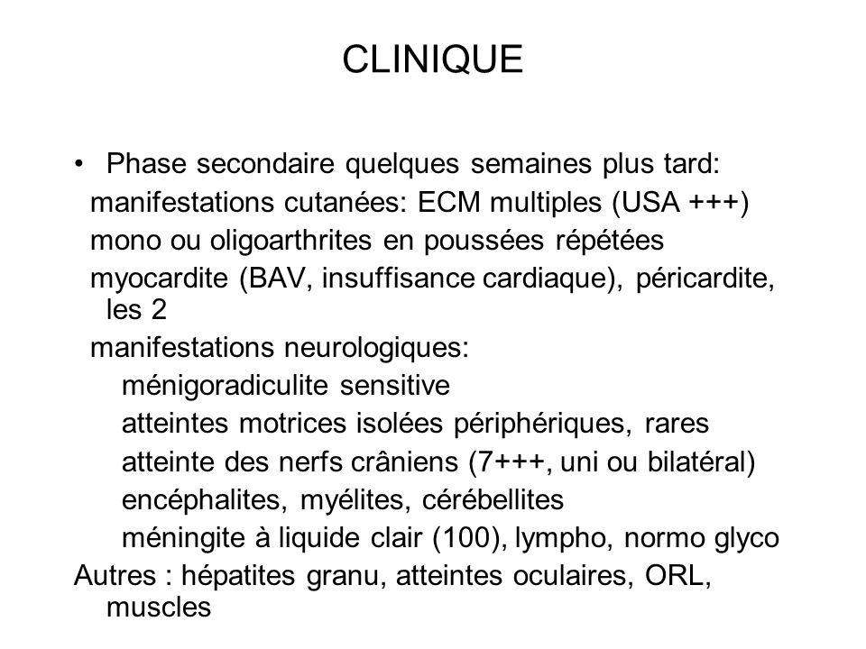 CLINIQUE Phase secondaire quelques semaines plus tard: manifestations cutanées: ECM multiples (USA +++) mono ou oligoarthrites en poussées répétées my