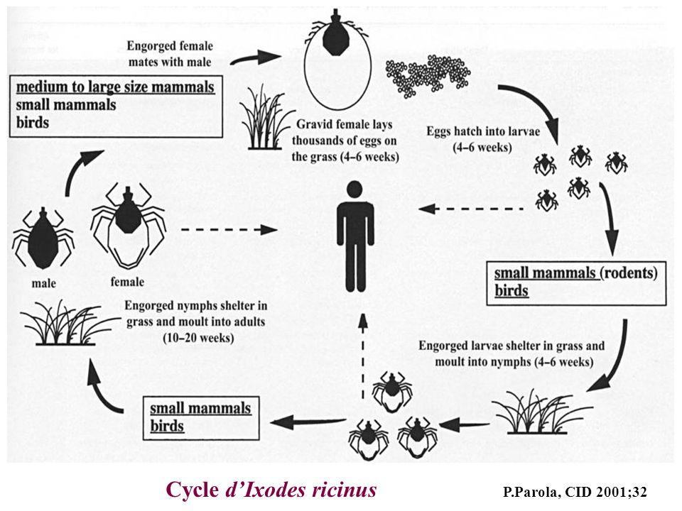 Cycle dIxodes ricinus P.Parola, CID 2001;32