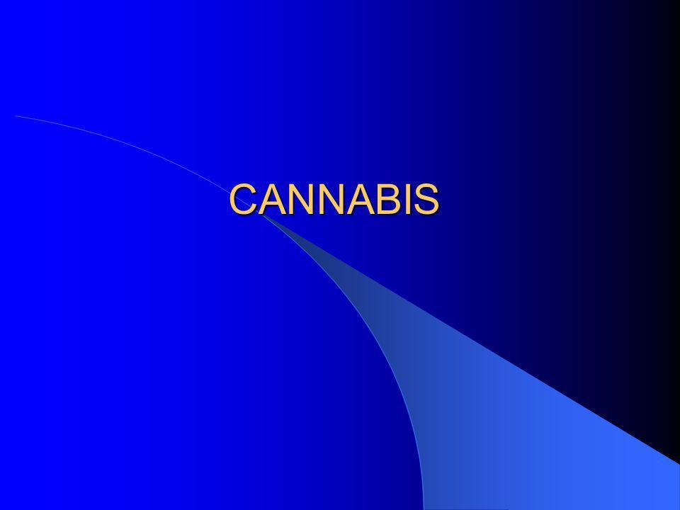 Qui est dépendant au cannabis.