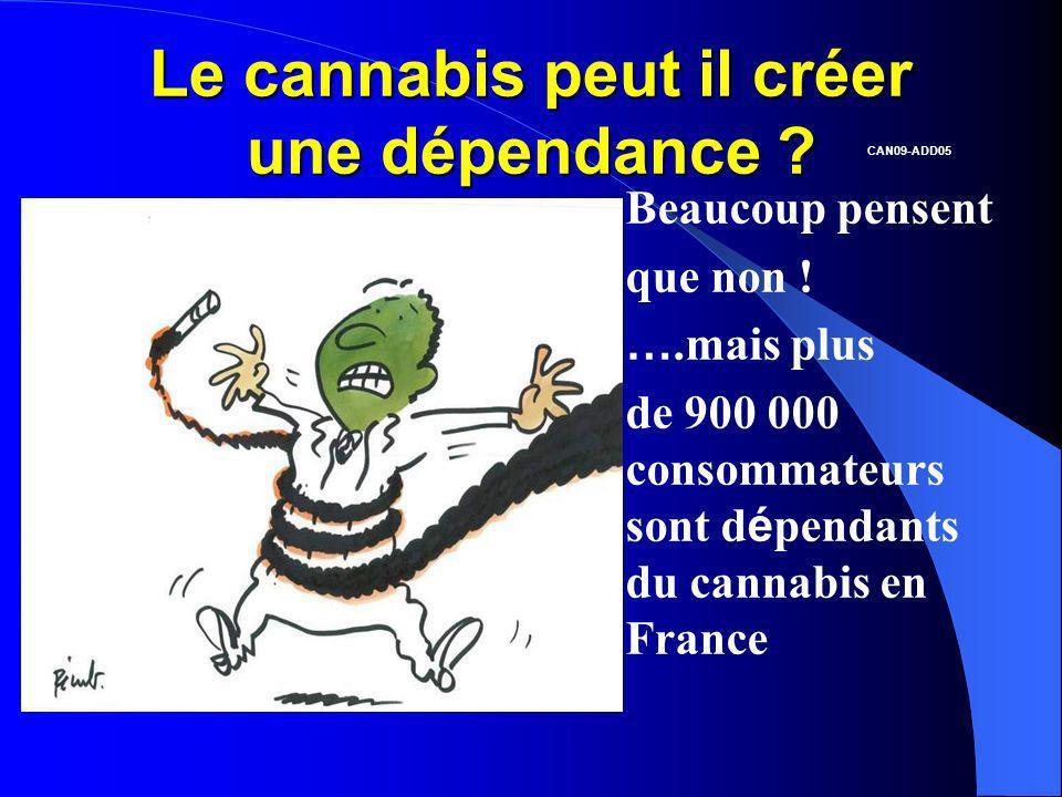 Le cannabis peut il créer une dépendance ? Beaucoup pensent que non ! ….mais plus de 900 000 consommateurs sont d é pendants du cannabis en France CAN