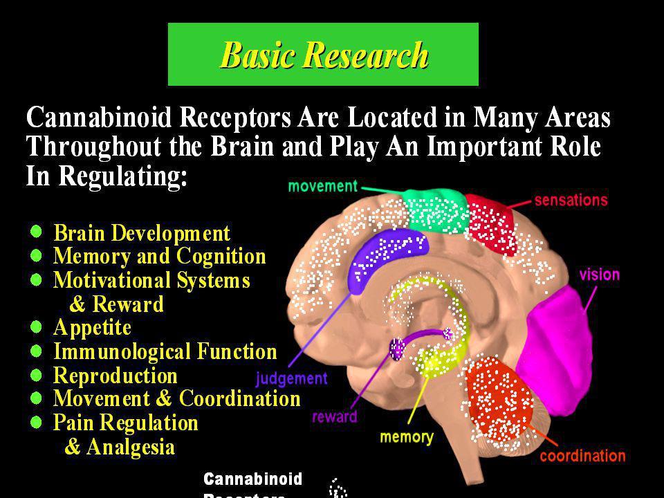 Effets à long terme du Cannabis Neurobiologie : désactivation dopaminergique par rétro- contrôle, désensibilisation (voies méso-limbique et méso-corticales) Neurotoxicité réversible (hippocampe) Symptômes : apathie, anhédonie agressivité tolérance, sevrage « craving » troubles de la perception, troubles de lattention, idées délirantes, hallucinations troubles de la mémoire