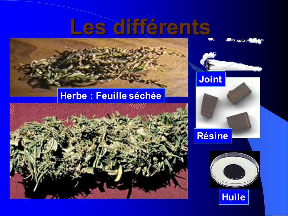 Les différents cannabis Herbe : Feuille séchée Huile Résine Joint CAN03-FOR03