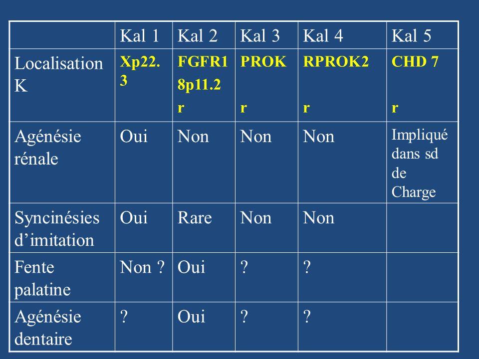Autres causes génétiques dhypogonadisme hypogonadotrope Hypogonadisme hypogonadotrope isolé -Kiss 1/GPR 54 -TAC3 TAC3R -Récepteur de la GnRH -GnRH1 Hypogonadisme hypogonadotrope + cadre syndromique - Prader-Willy, Bardet-Biedl - FGF8 (tr dominante syndrome avec palais ogival et surdité) - Leptine, Récepteur leptine (obésité)