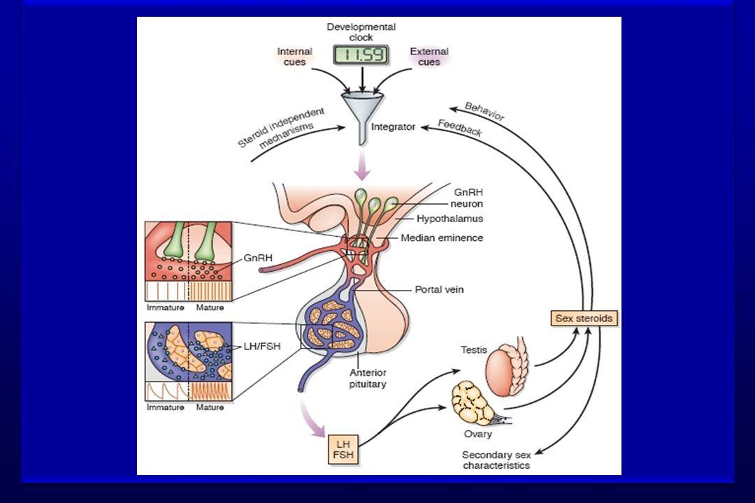JuvenileOnset of puberty Inhibitory inputs LHRH Neurons Excitatory inputs Inhibitory inputs LHRH Neurons Excitarory inputs A B