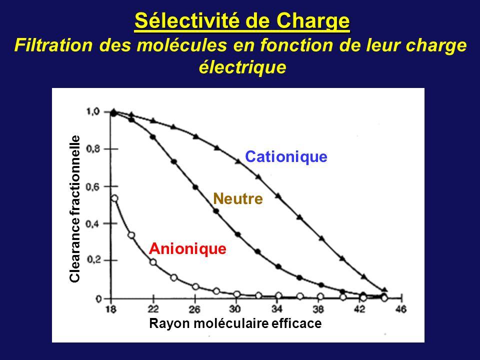 Cationique Neutre Anionique Rayon moléculaire efficace Clearance fractionnelle Sélectivité de Charge Filtration des molécules en fonction de leur char