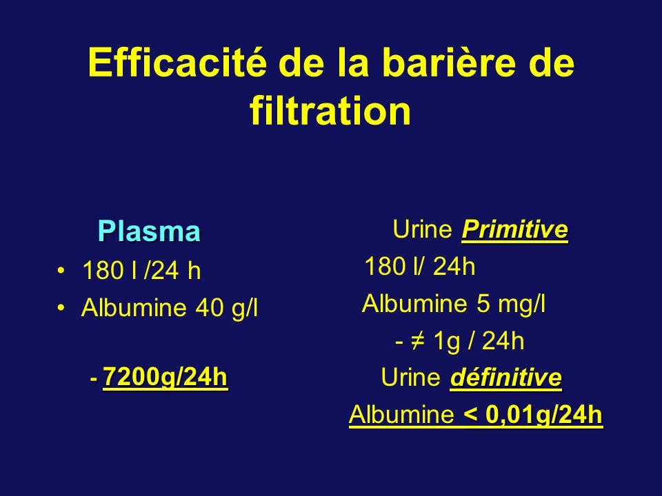 Efficacité de la barière de filtration Plasma Plasma 180 l /24 h Albumine 40 g/l - 7200g/24h Primitive Urine Primitive 180 l/ 24h Albumine 5 mg/l - 1g