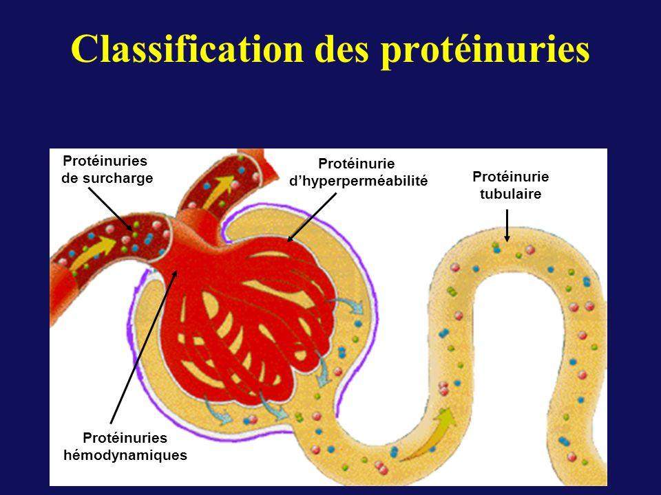 Protéinuries hémodynamiques Protéinuries de surcharge Protéinurie dhyperperméabilité Protéinurie tubulaire Classification des protéinuries