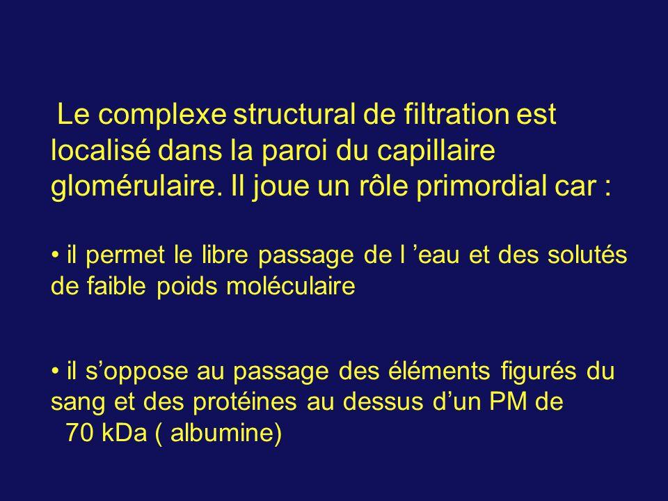 Le complexe structural de filtration est localisé dans la paroi du capillaire glomérulaire. Il joue un rôle primordial car : il permet le libre passag