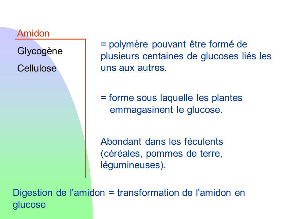 Amidon Glycogène Cellulose = forme sous laquelle les plantes emmagasinent le glucose. Abondant dans les féculents (céréales, pommes de terre, légumine