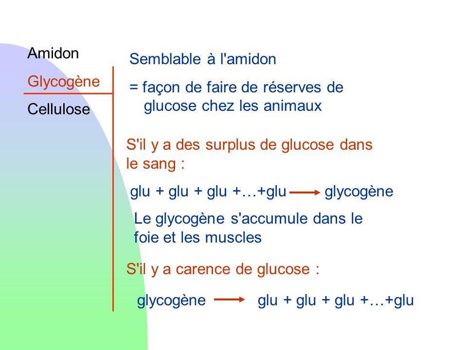 Amidon Glycogène Cellulose Semblable à l'amidon = façon de faire de réserves de glucose chez les animaux S'il y a carence de glucose : glycogèneglu +