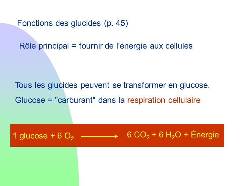 Fonctions des glucides (p. 45) Tous les glucides peuvent se transformer en glucose. Glucose =