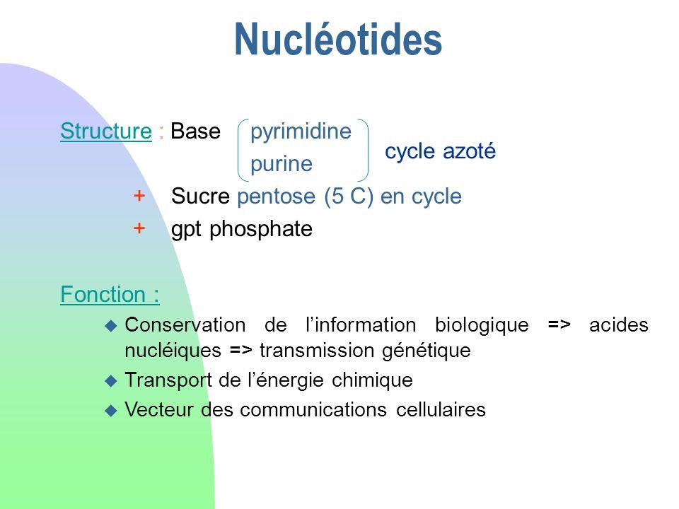 Nucléotides Structure : Base pyrimidine purine + Sucre pentose (5 C) en cycle + gpt phosphate Fonction : u Conservation de linformation biologique =>
