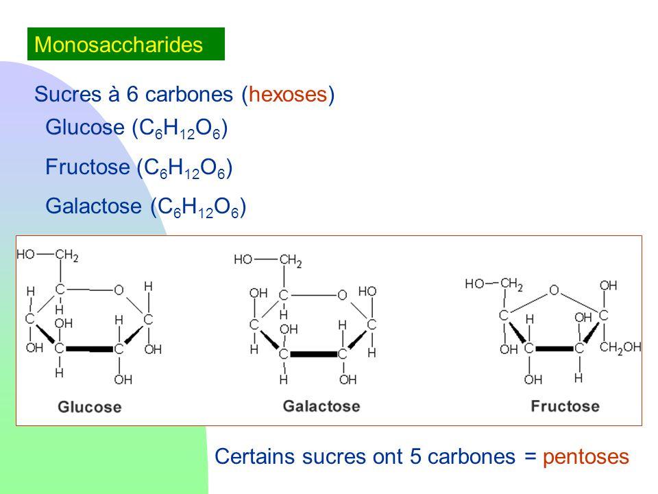Monosaccharides Sucres à 6 carbones (hexoses) Glucose (C 6 H 12 O 6 ) Fructose (C 6 H 12 O 6 ) Galactose (C 6 H 12 O 6 ) Certains sucres ont 5 carbone