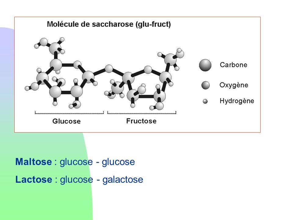 Maltose : glucose - glucose Lactose : glucose - galactose