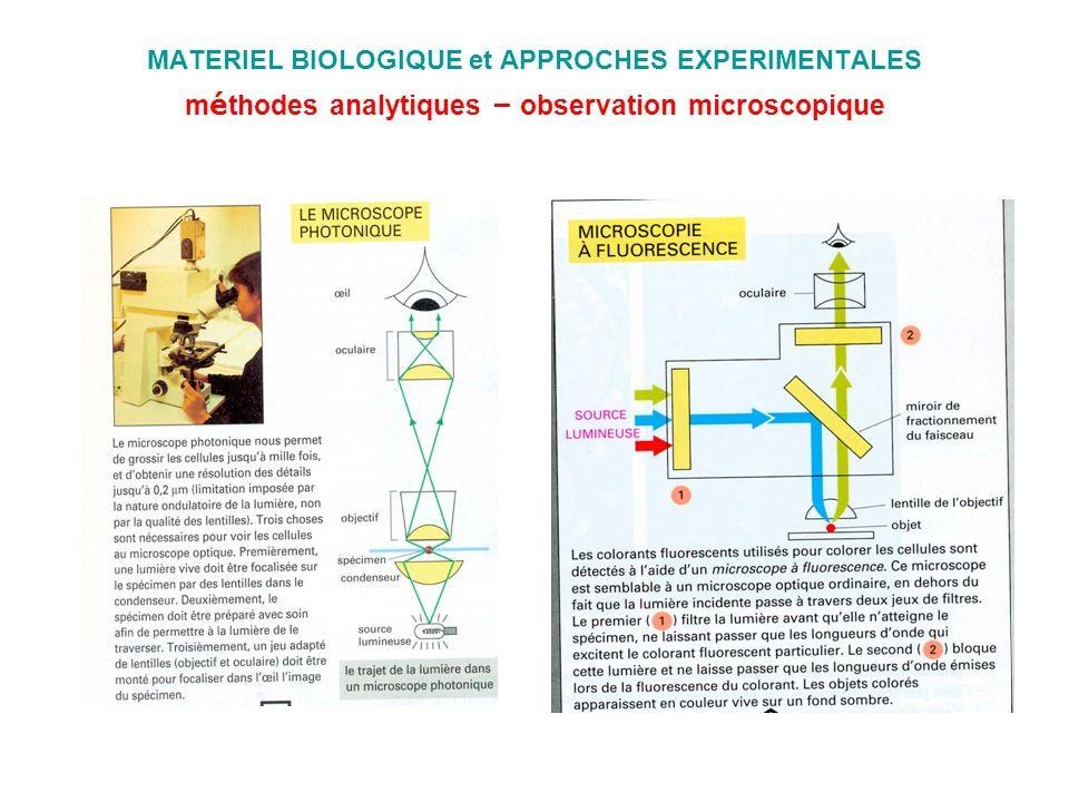 MATERIEL BIOLOGIQUE et APPROCHES EXPERIMENTALES m é thodes analytiques – observation microscopique