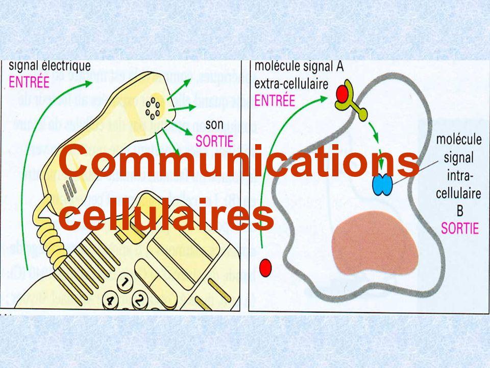 Comme les organismes multicellulaires, les cellules ont individuellement besoin de percevoir leur environnement et dy répondre (nutrition, lumière, dangers….) Dans un organisme multicellulaire, chaque cellule utilise ces capacités pour communiquer avec les autres cellules 3 modes des communication cellulaires sont possibles sécrétion de substances chimiques signal à distance contact physique direct molécules liées à la membrane jonctions type « gap » échange de molécules informatives