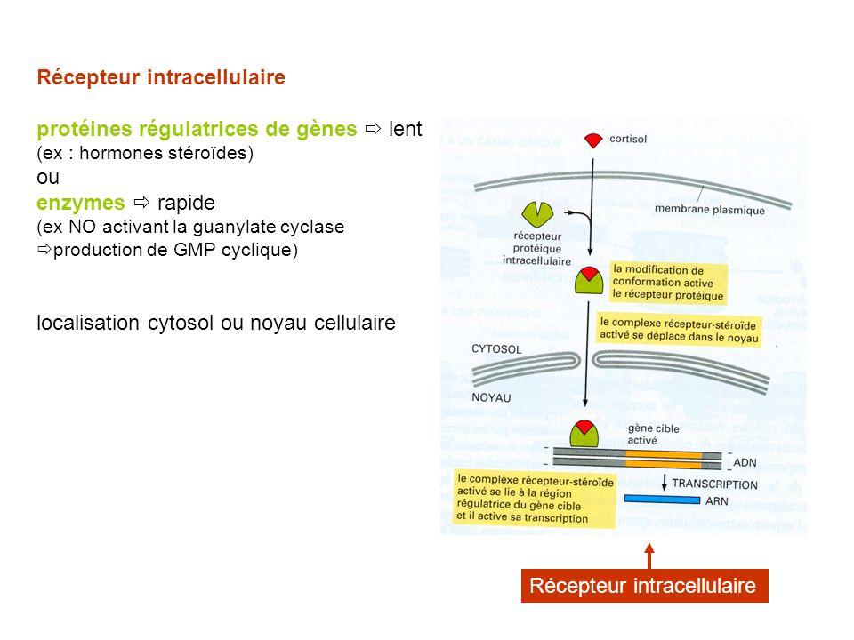 Récepteur intracellulaire protéines régulatrices de gènes lent (ex : hormones stéroïdes) ou enzymes rapide (ex NO activant la guanylate cyclase production de GMP cyclique) localisation cytosol ou noyau cellulaire