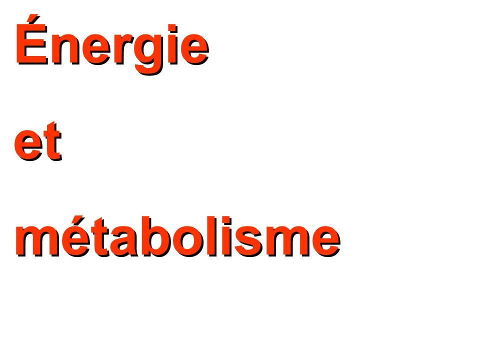 Énergie et métabolisme Énergie et métabolisme