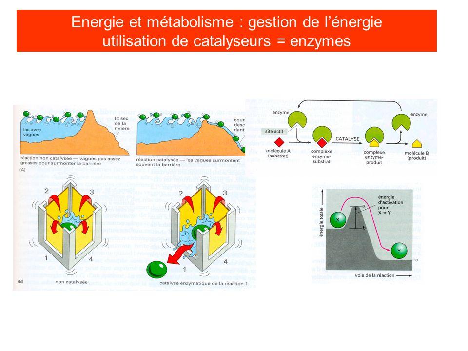 Energie et métabolisme les sources dénergie cellulaire