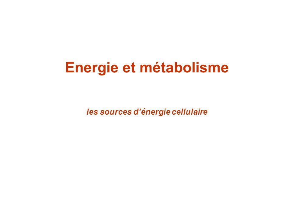 Source énergétique de la cellule : photosynthèse et respiration utilisent photosynthèse et respiration.