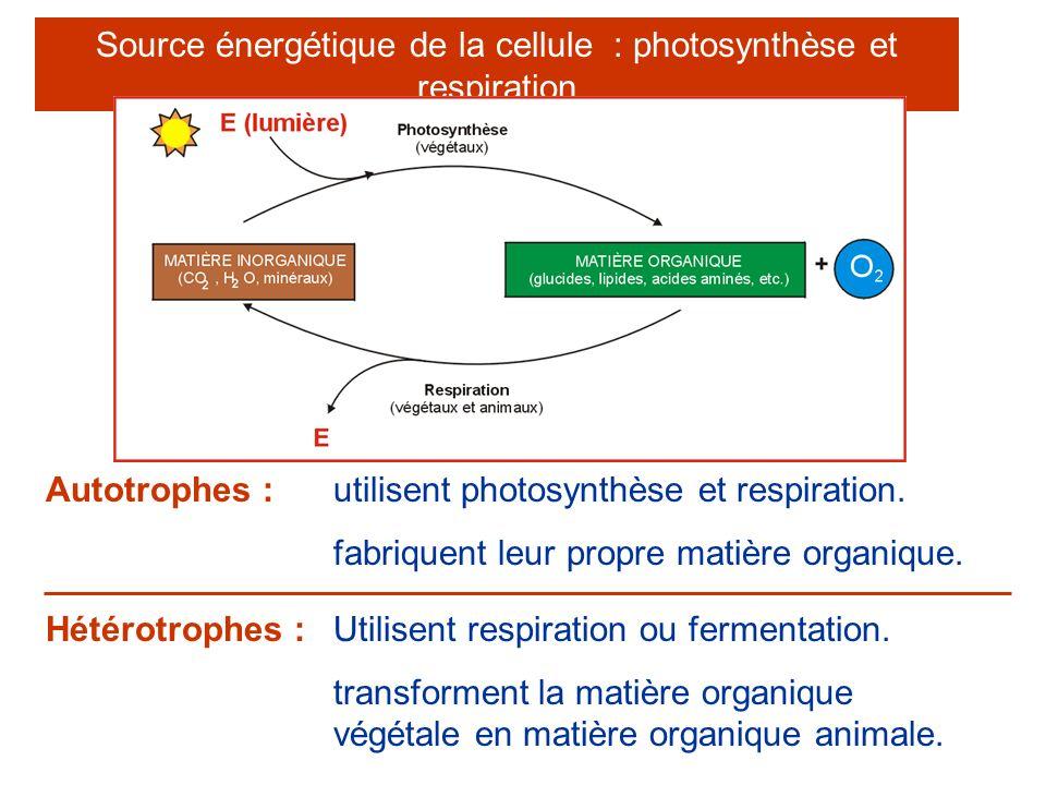 Source énergétique de la cellule : photosynthèse et respiration utilisent photosynthèse et respiration. fabriquent leur propre matière organique. Auto