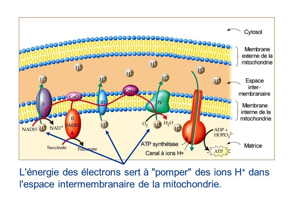 L'énergie des électrons sert à