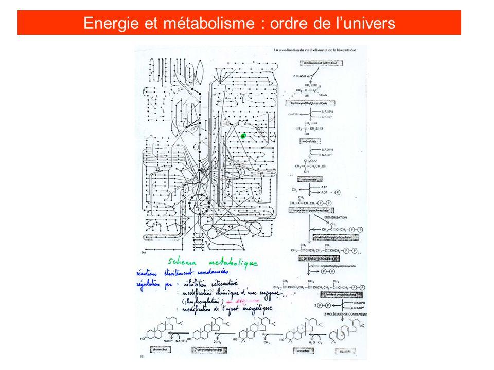 1er principe de thermodynamique « lénergie peut être transformée dune forme en une autre mais ne peut être crée ni détruite » Energie et métabolisme : gestion de lénergie