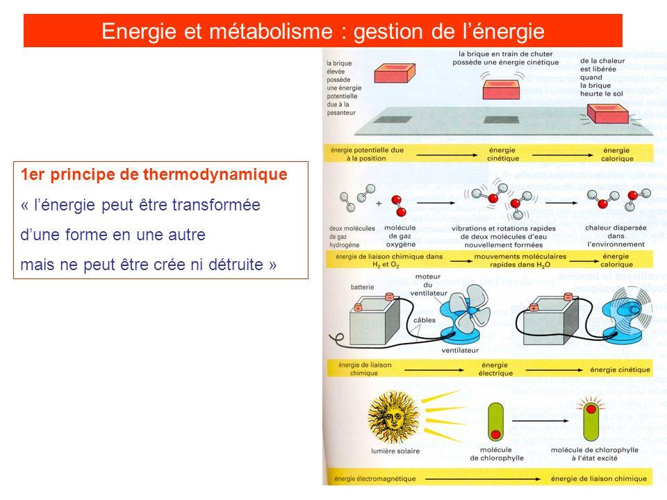 1er principe de thermodynamique « lénergie peut être transformée dune forme en une autre mais ne peut être crée ni détruite » Energie et métabolisme :