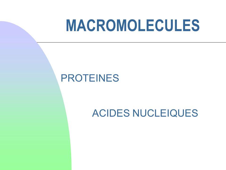 Molécules de PM > ou très largement > 1000 Structure complexe et précise à 3 ou 4 niveau dorganisation primaire, secondaire, tertiaire et quaternaire* forme définitive et souvent « active » de la molécule Responsables des fonctions les plus caractéristiques de la cellule vivante : assemblage des constituants cellulaires catalyse des transformations chimiques production de mouvements hérédité