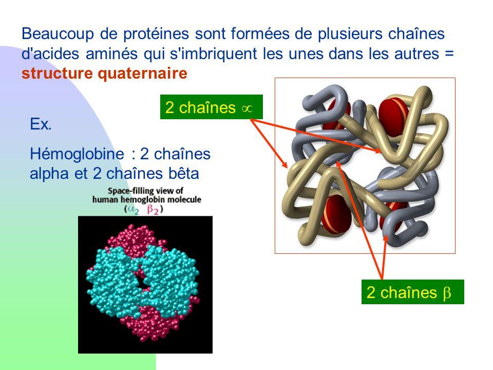 Beaucoup de protéines sont formées de plusieurs chaînes d'acides aminés qui s'imbriquent les unes dans les autres = structure quaternaire Ex. Hémoglob